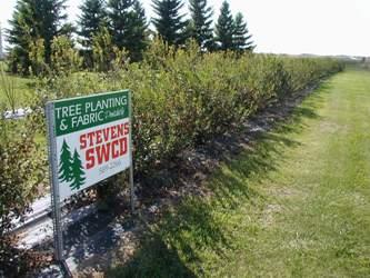 SWCD Trees